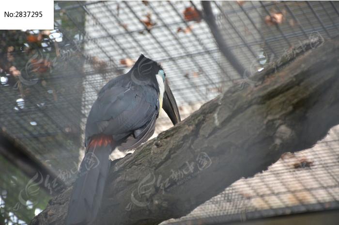 原创摄影图 动物植物 空中动物 凹嘴巨嘴鸟背面  请您分享: 素材描述
