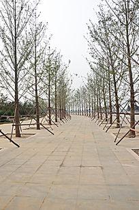 两排树和中间的路