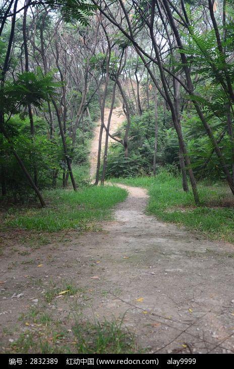 密林里曲折的上坡路图片