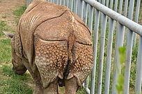 一只犀牛的屁股