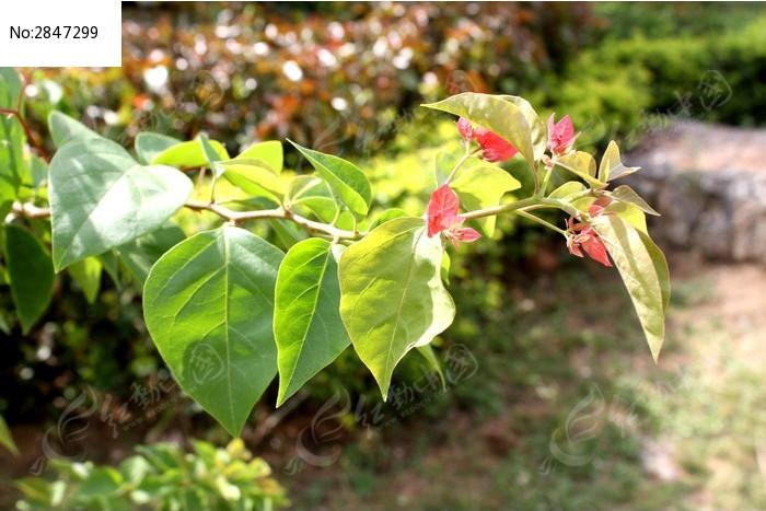 原创摄影图 动物植物 花卉花草 植物花叶