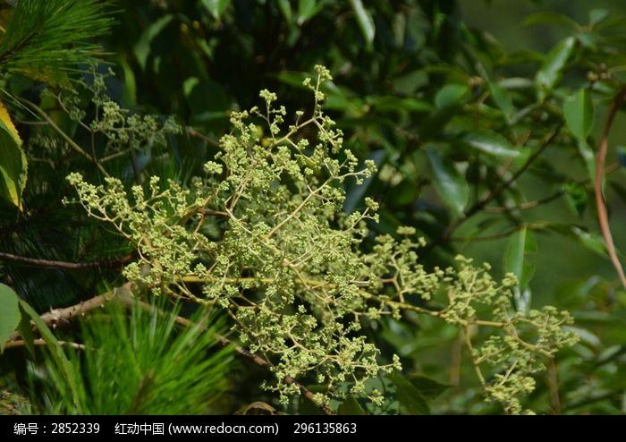 淡绿色野花图片素材下载(编号:2852339)