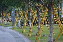公园里刚种的一排树