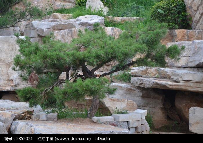 寿光农圣公园里的假山和松树