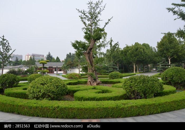 潍坊植物园花坛里的银杏树