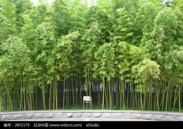 潍坊植物园里的山竹