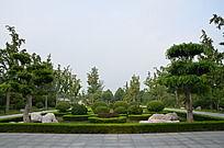 潍坊植物园里修剪整齐的树木
