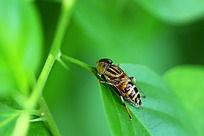 一只小黄蜂