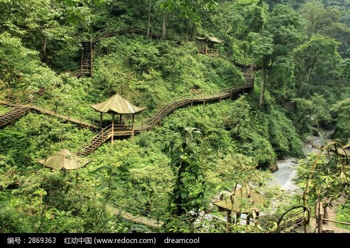猴山林中长廊图片