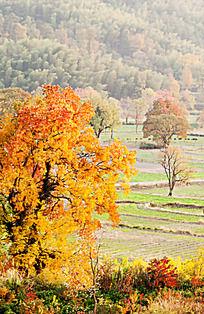 黟县塔川多色的秋天