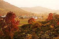 黟县塔川秋季生态
