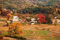 黟县塔川秋天的家园
