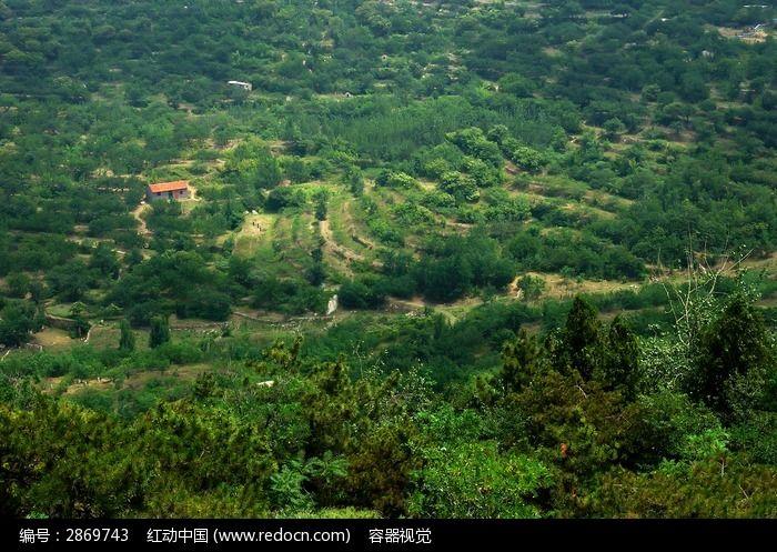 阳光照射的山林植被风光图片