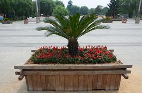 一株绿色的花卉植物