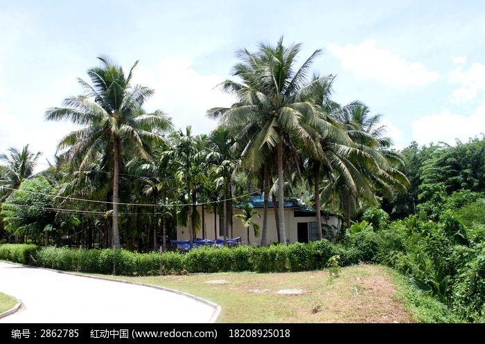 原创摄影图 动物植物 树木枝叶 道路椰子树  请您分享: 红动网提供