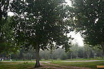 绿色的小树林