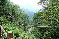 森林古吊桥