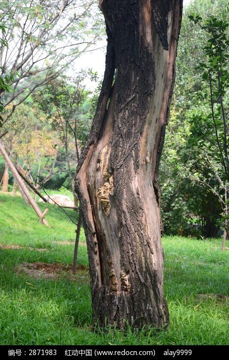 弯曲是树干图片,高清大图_树木枝叶素材