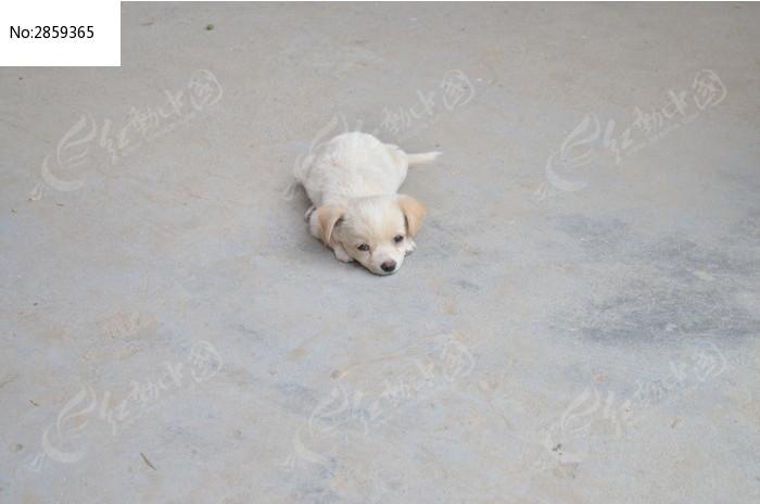 小狗图片,高清大图_陆地动物素材