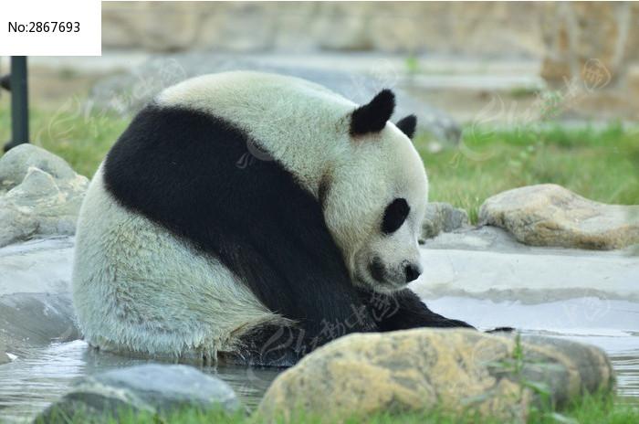 熊猫s29a912彩电场扫描电路图