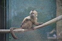一只蹲在空中的猴子