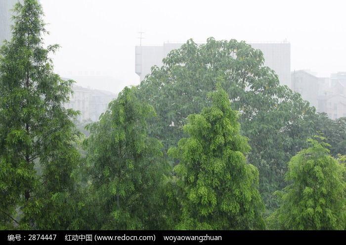 雨中树木图片_图片_红动手机版
