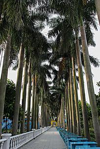 百万葵园中的一条小路