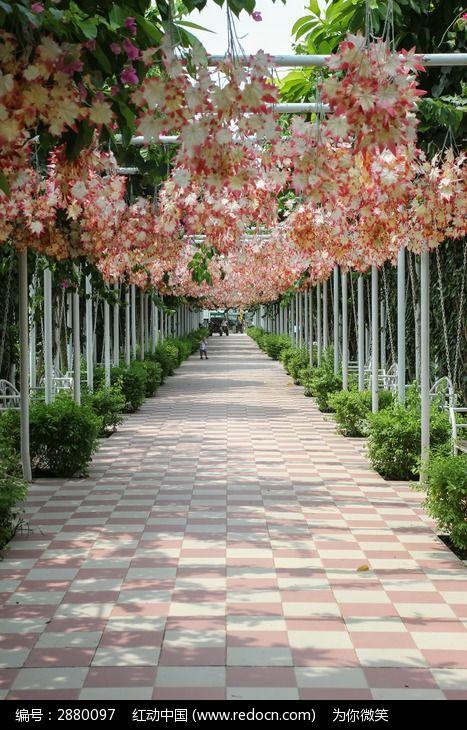 枫叶路 百万葵园 超清