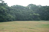 干净的绿色草地和树丛