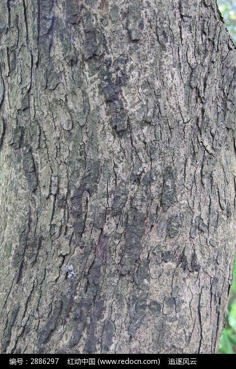 纹路 树干 树皮 各种各样的树皮