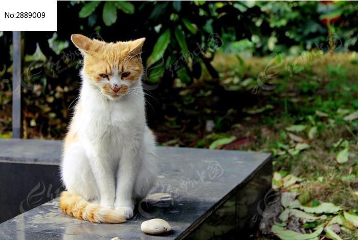 原创摄影图 动物植物 家禽家畜 孤独可怜的小猫图片