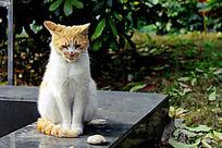 孤独可怜的小猫