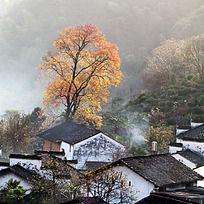 红枫与村落