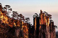 黄山松生长的陡峭的山峰上