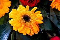 娇艳的黄色花朵