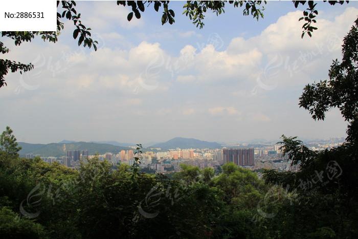 当前位置:原创摄影图>自然风景>森林树林>蓝天白云下的树木