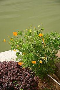 绿色植物和黄色的小花