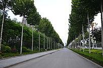 弥河弥河公园外道路两旁整齐的树木