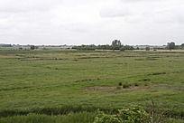 南方的小草原