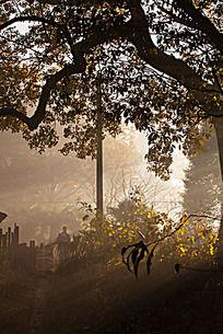 清晨大树下透雾的阳光