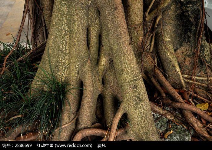 奇异的树根图片,高清大图_树木枝叶素材