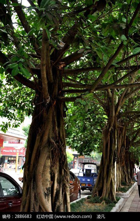 人行道上的树木图片_图片_红动手机版