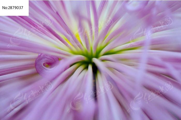 唯美花心特写图片_动物植物图片