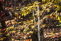 五彩斑斓的树叶
