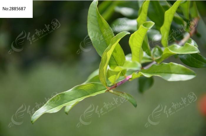 阳光下嫩绿色的树叶图片,高清大图_树木枝叶素材