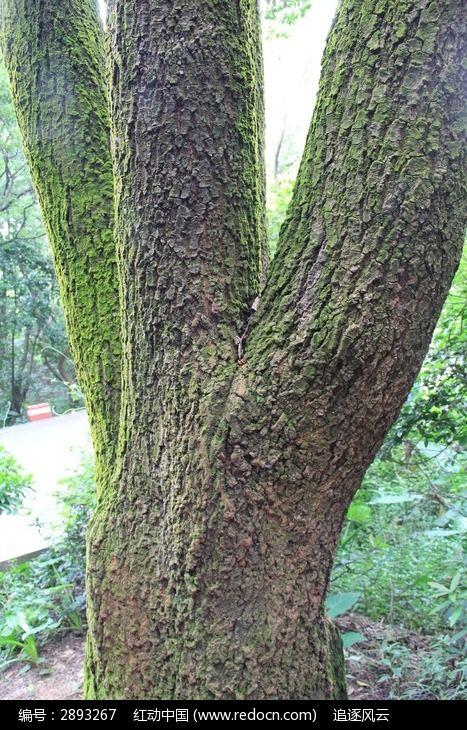 树木枝干图片_图片_红动手机版