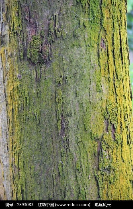 长着绿色青苔的树皮图片