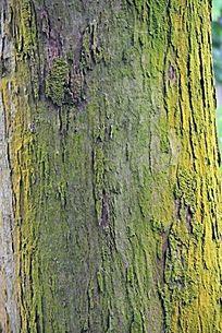长着绿色青苔的树皮