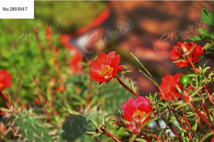 原创摄影图 动物植物 花卉花草 红花朵朵开