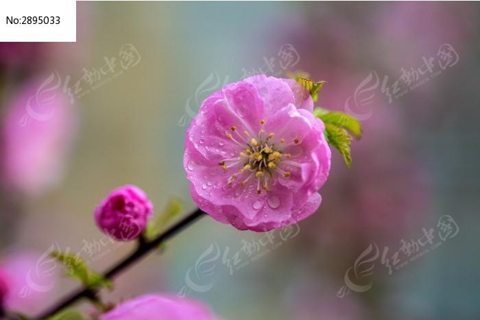 原创摄影图 动物植物 花卉花草 花朵